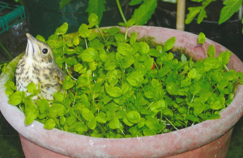 Winning photo number one - a bird sat in a plant pot