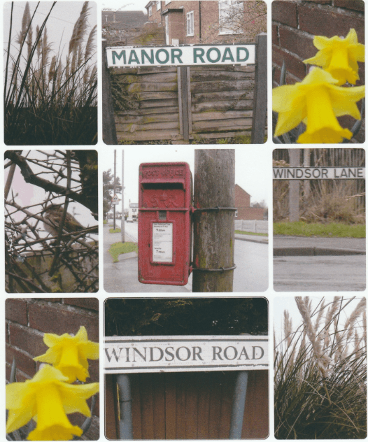 Winning photo two - montage of street signs, trees and dafodils